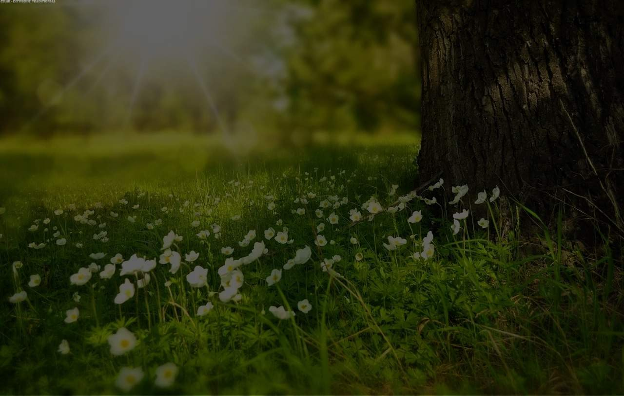 CELAR- Distilerie Transilvania